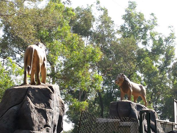 lion_safari_02