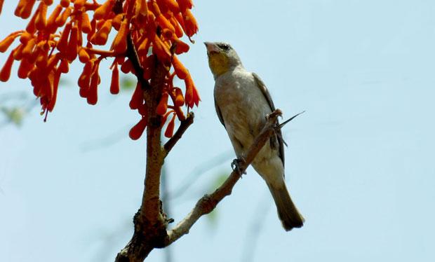 yellowsparrow.jpg