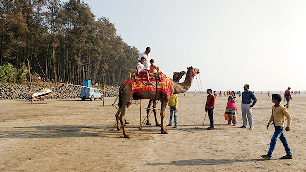 camels.jpg