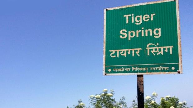 07_tiger.jpg