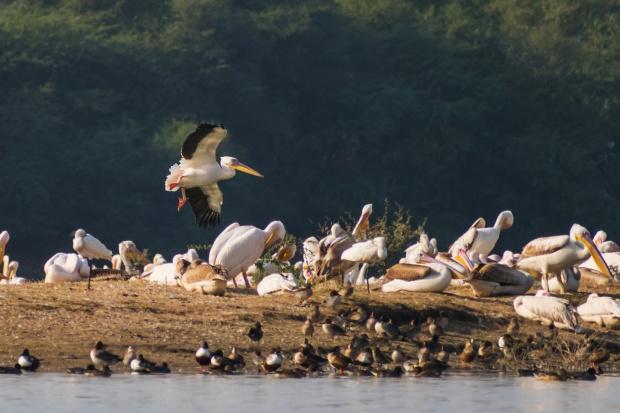 pelican_touchdown