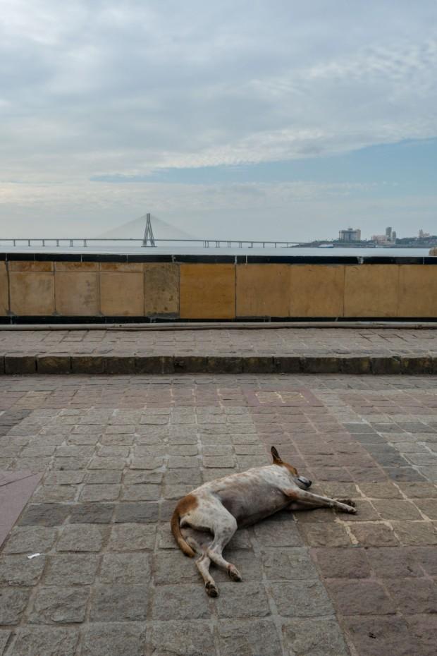 ShivajiPark_Doggy.jpg