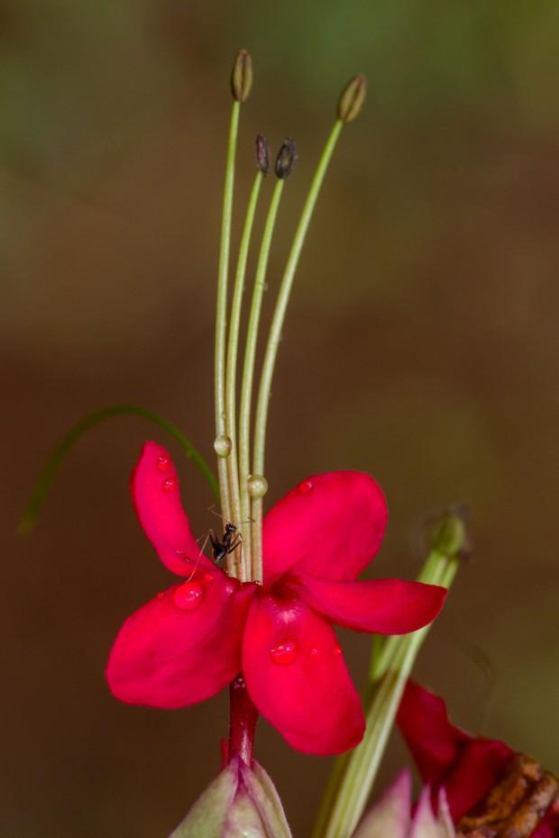 02_R_ant_flower.jpg