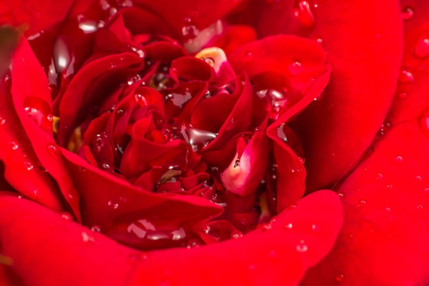 02_R_rose_water.jpg