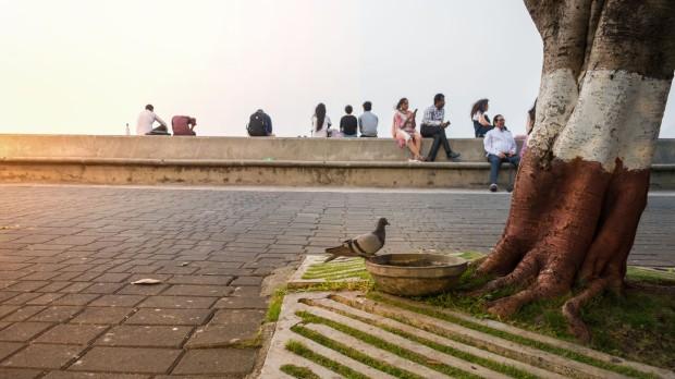 Nariman_11_Pigeon.jpg